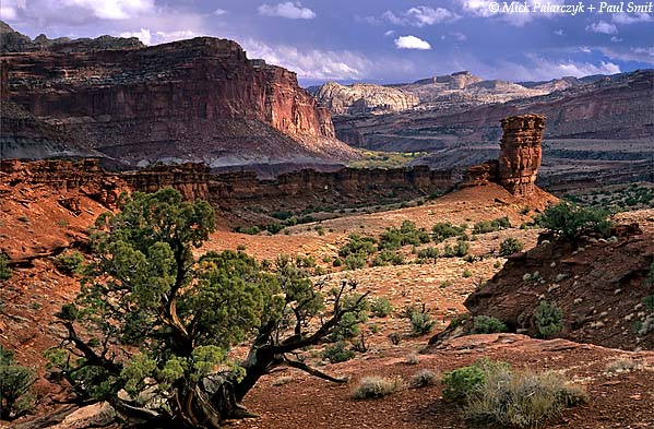 [USA.UTAH 28222 'Landscape near Fruita.'  	Landscape northwest of Fruita in Capitol Reef National Park. Photo Mick Palarczyk & Paul Smit.