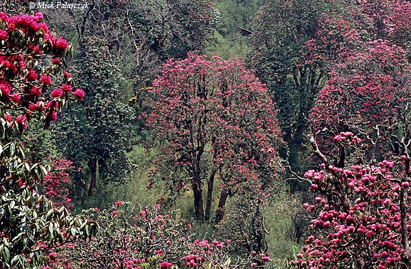 [NEPAL 27132]