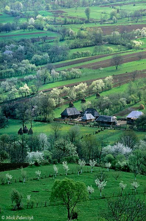 [ROMANIA.MARAMURES 23.671] 'Spring landscape.' Surrounded by flowering fruit trees and roofed by traditional wooden boards the houses of Sîrbi are tucked away in the idyllic Cosau valley. Photo Mick Palarczyk.