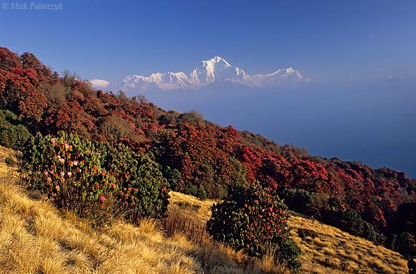 [NEPAL 27036]