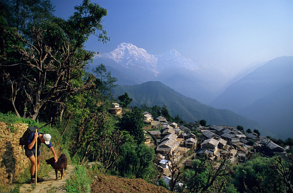 [NEPAL 27161] 'Ghandrung with Annapurna South.'  The white peak of Annapurna South towers above the village of Ghandrung in the Annapurna Conservation Area. Photo Paul Smit.