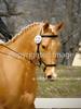Theme: Gold(en)<br /> A pretty, gold eventer.<br /> Spring Bay Horse Trial, 2013