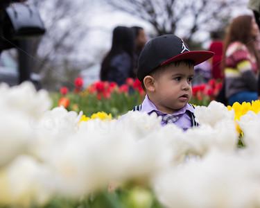 Boy in flowers