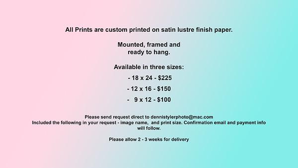 Print Gallery Header_