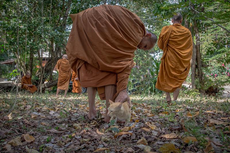 Monks and cat, Koh Pra Thong, Thailand