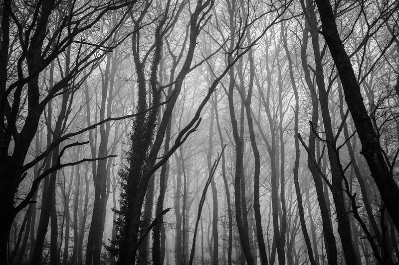 Wood, Italy