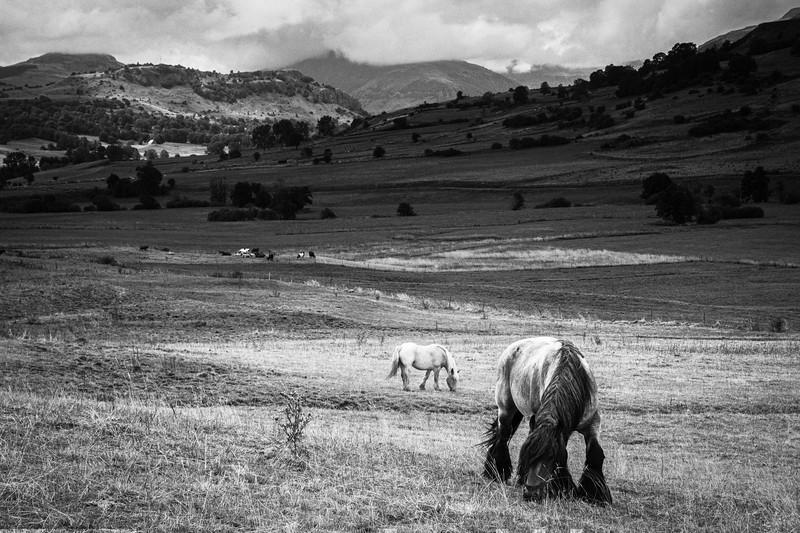 Horses, Auvergne, France