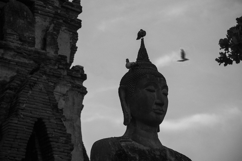 Birds and Buddha