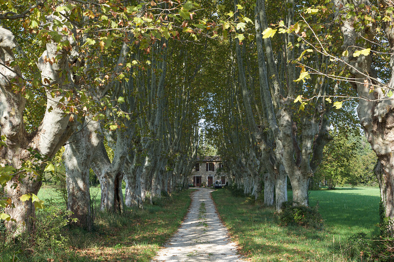 Alley of trees, Provence