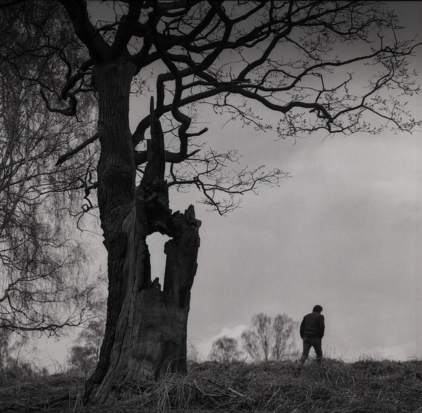 Jagged tree