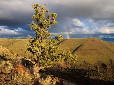 Sutton Rainbow