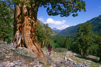 Pacific Crest Trail I
