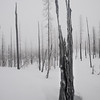 Ice clings to the charred remains of a forest burned during the B and B Complex Fires of 2003, Cascade Mountains, Oregon