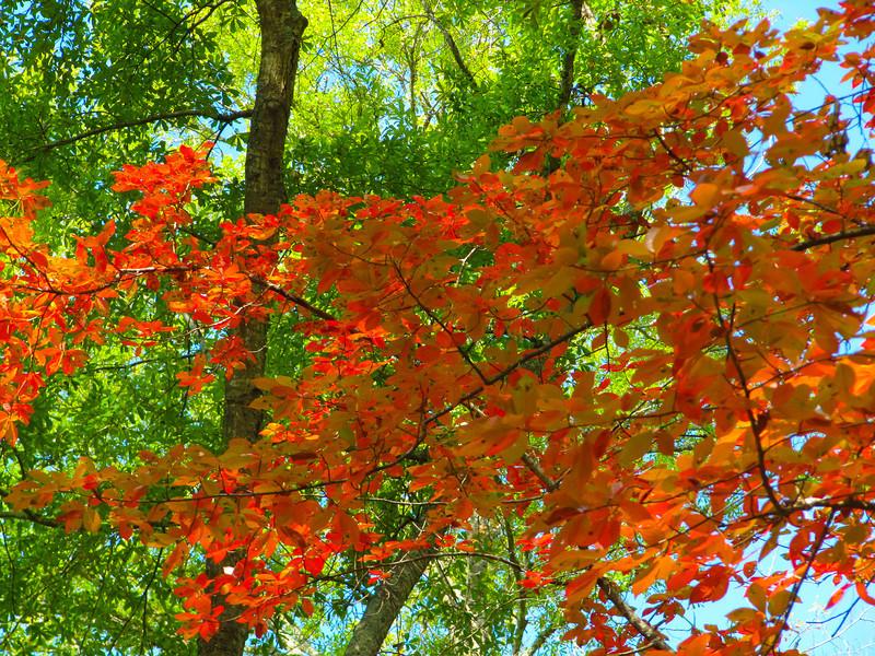 Fall Color, Tyler TX 2011-11-02