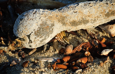 Carmel River State Beach, Carmel, CA.