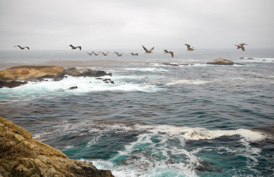 Pelican Bomber Force, Point Lobos State Reserve, California