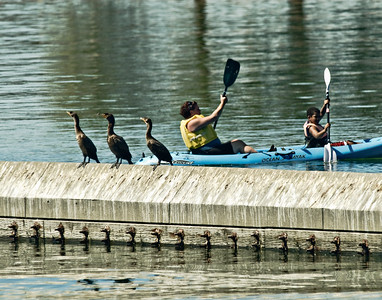 The Cormorants Are Amused