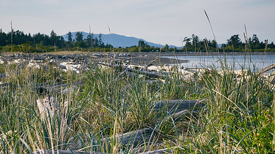 Another Westcoast Driftwood Beach - Islandview