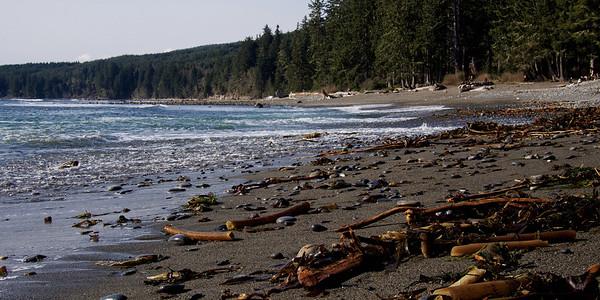 West Coast Kelp
