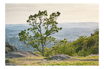 The Tree on The Mountain #2