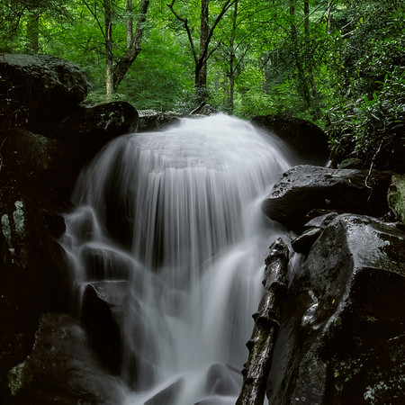 Trail to Ramsey Cascade - The Great Smoky Mountains National Park
