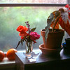 Windowsill Items, Houston 1981-07-01