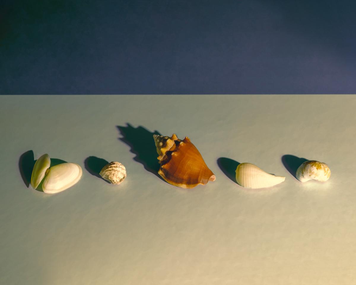 Seashells not by the Seashore