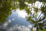 Palms reflected in ancient fish pond, former Kona Village Resort site, Kona, Hawaii USA
