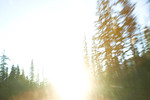 Motion blurred trees and sunset, WA USA