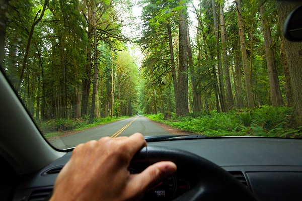 Driver's pov though windshield of old growth forest in Olympic National Park, WA USA