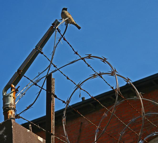 Guard bird