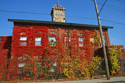 Red ivy building