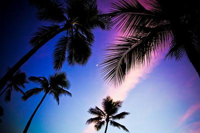 Honolulu Hawaii Palms Sunset