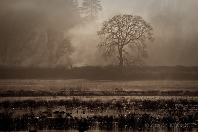 Morning fog at Ridgefield NWR