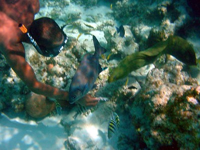 FEEDING A GREEN MORAY EEL