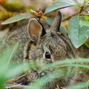 Baby bunny in the yard