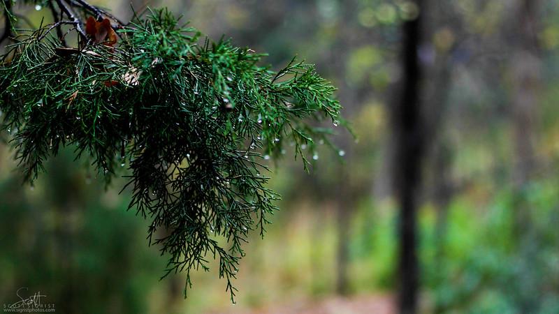 Wet Winter in Verteran's Park