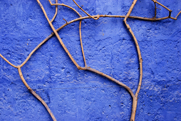 Vine and Blue Wall