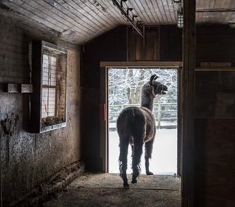 Brother in the Doorway