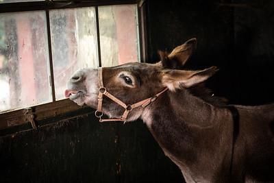 Merri with a Tasty Window