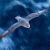 Gliding over Water and Ice