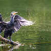 Drying My Wings