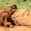Young elephant enjoying a mud bath in Samburu, Kenya