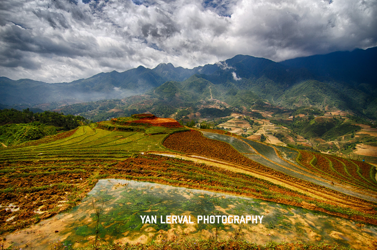 Rice fileds, Sapa, Vietnam