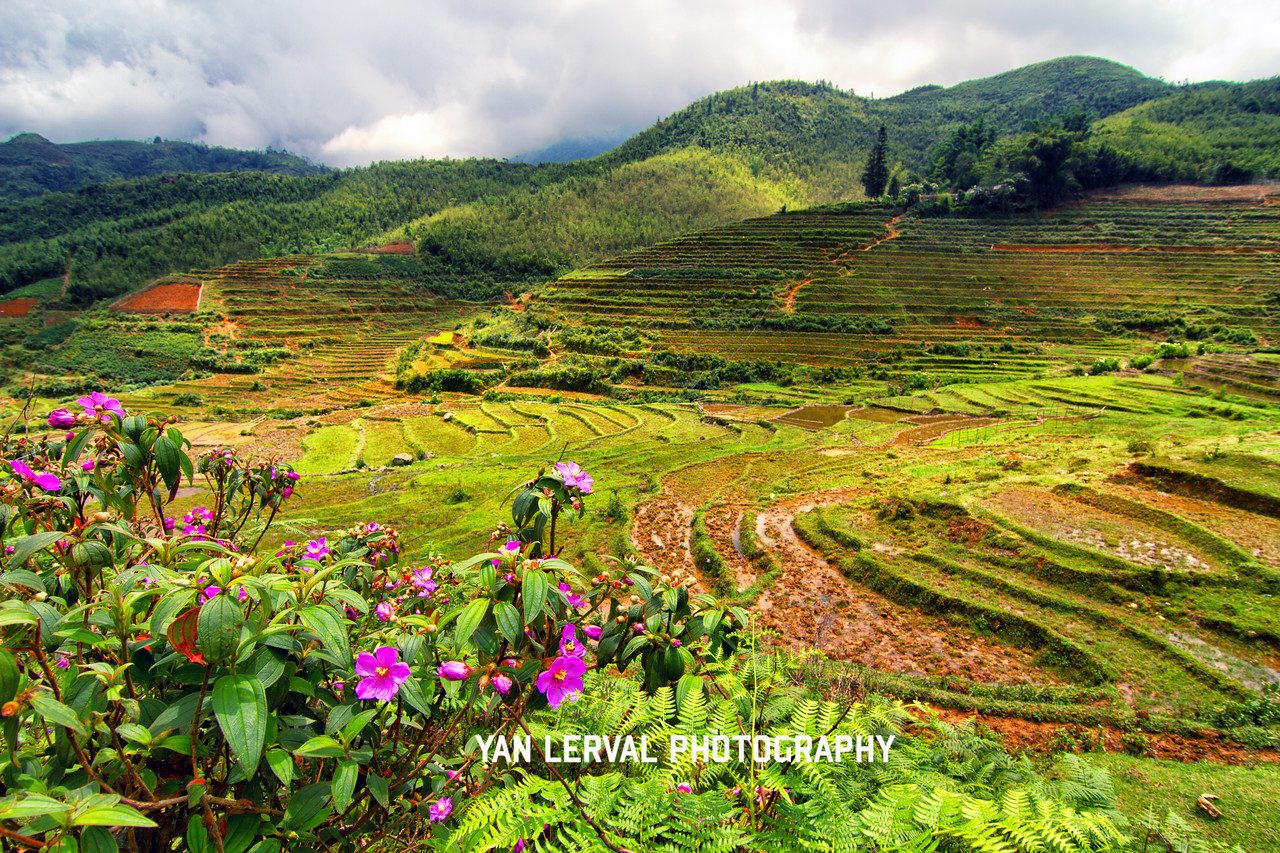 Rice fields in Sapa, Vietnam