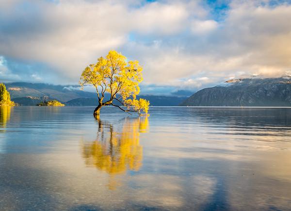 Wanaka Tree Sunrise, Lake Wanaka, South Island of New Zealand