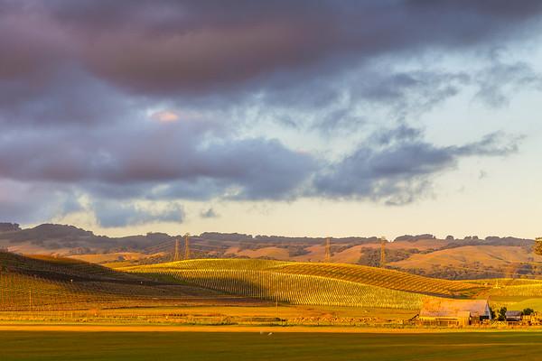Vineyards, Petaluma, Ca