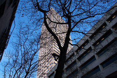 There are a lot of trees, and buildings in Portland.