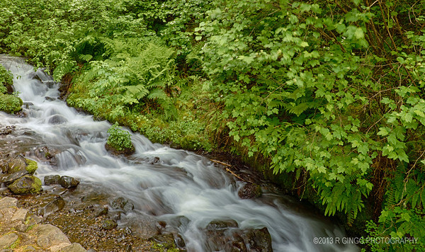 Oregon Stream By Wahkeena Falls
