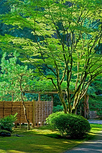 Japanese Gardens in Summer